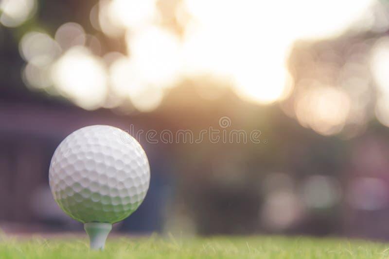 Golfboll på grönt gräs som är klart att spela på golfbanan Med kopiera utrymme arkivbild