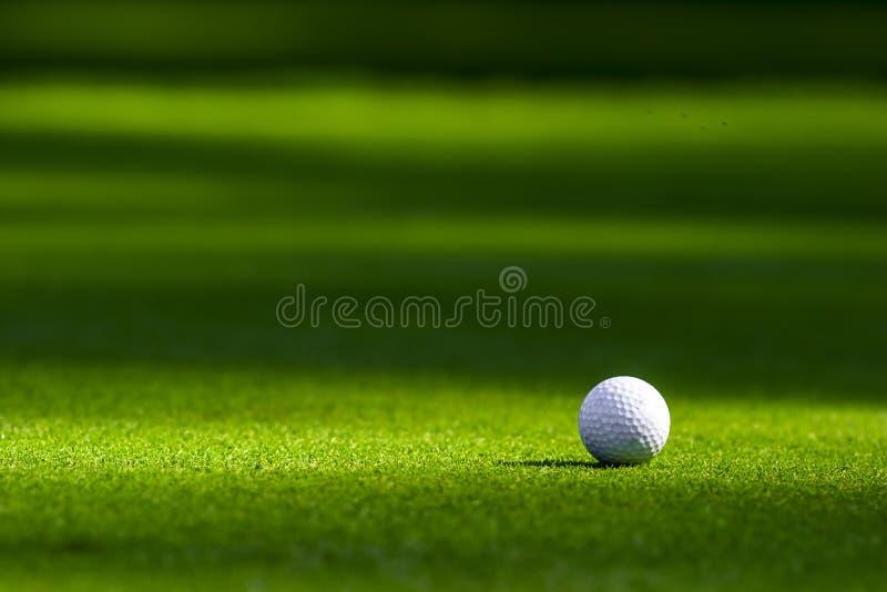 Golfboll på greenen arkivbild