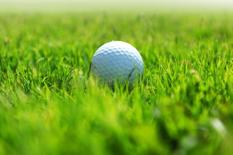 Golfboll på kurs royaltyfria bilder