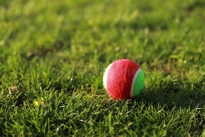 Golfboll på textur för grönt gräs av golfbanan för bakgrund arkivbilder