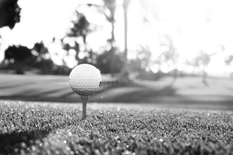 Golfboll på utslagsplats på golfbana över ett suddigt grönt fält på solnedgången svart white royaltyfria foton