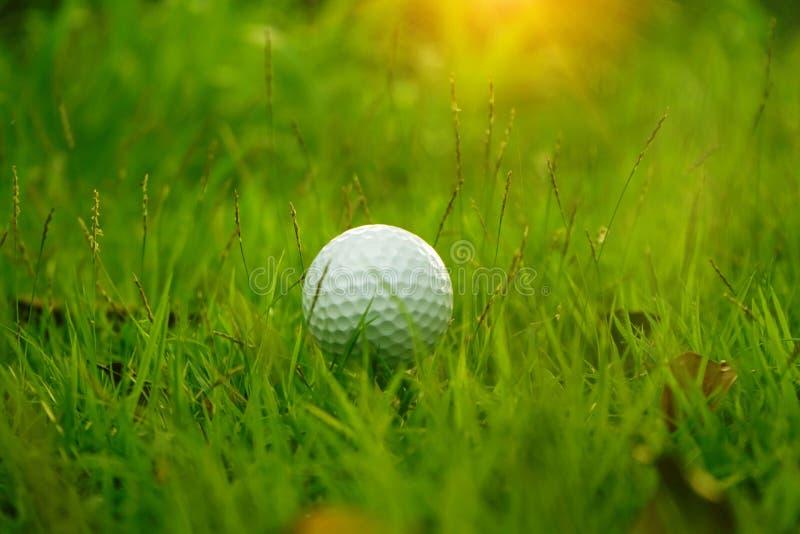 Golfboll på utslagsplats i härlig golfbana på solnedgångbakgrund arkivfoto