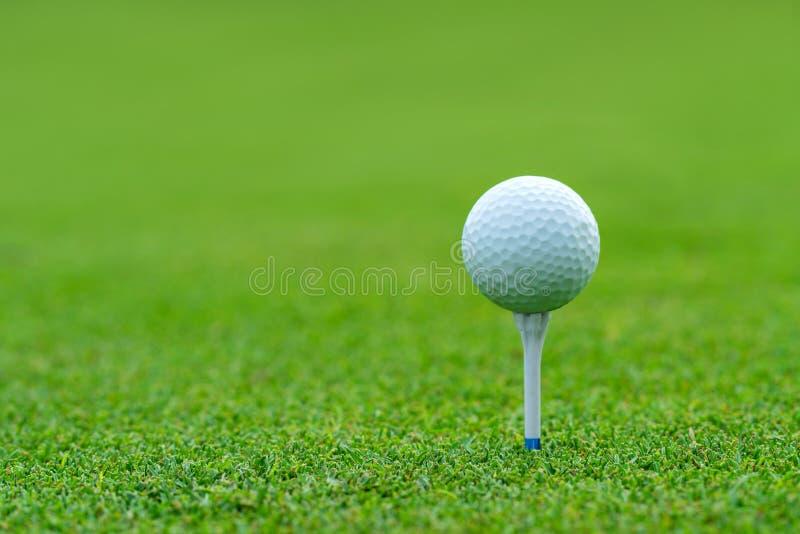 Golfboll på utslagsplatsen som är klar att skjutas på golfcourt royaltyfri bild