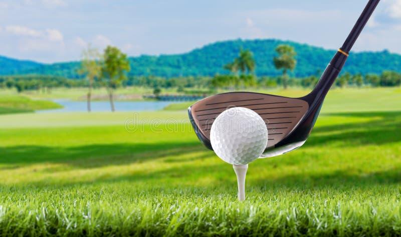 Golfboll på utslagsplatspinnor i golfbana royaltyfri fotografi