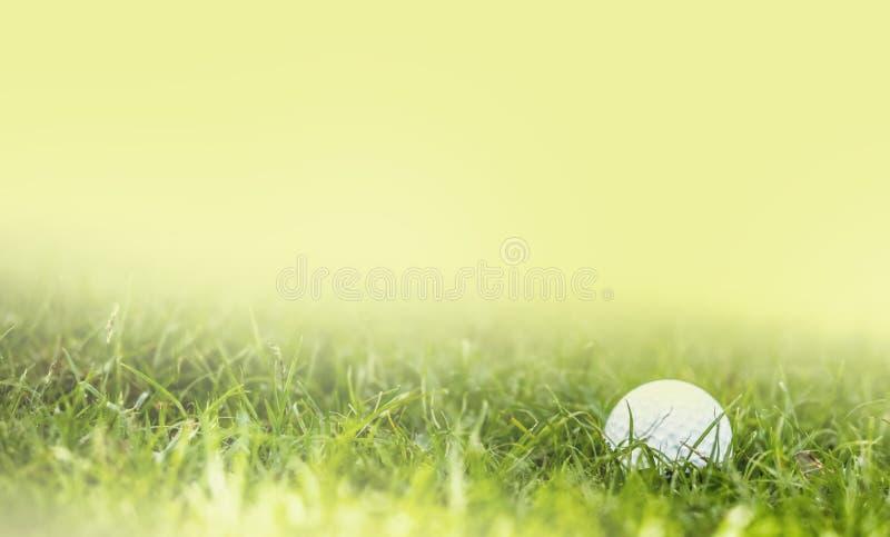 Golfboll p? gr?nt gr?s arkivbilder
