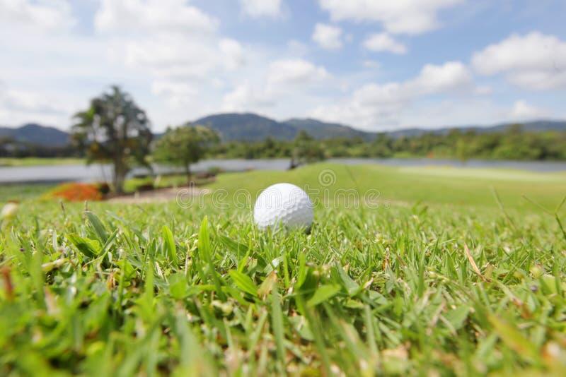 Golfbollen jagar på fotografering för bildbyråer