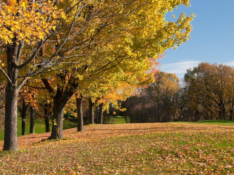 Golfe em árvores da queda no fairway foto de stock