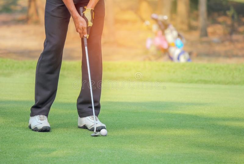 Golfer in action putting golf ball on the green grass near the hole royalty free stock images
