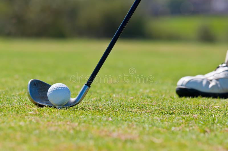 Golfer in a golf course royalty free stock image