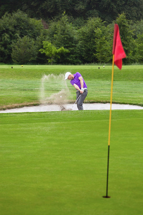 Golfer playing out of a bunker stock images