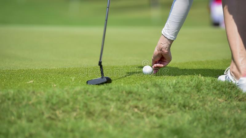 Golfer putting golf ball on green grass for check fairway to hole royalty free stock photo