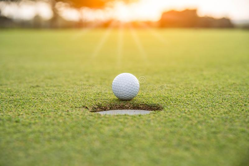 Golfer is putting golf ball on green grass at golf course for game with blur background stock image