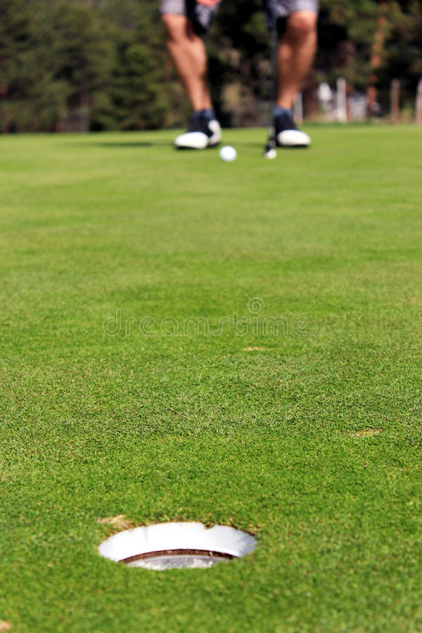 Download Golfer ready to putt stock photo. Image of business, calm - 24566564