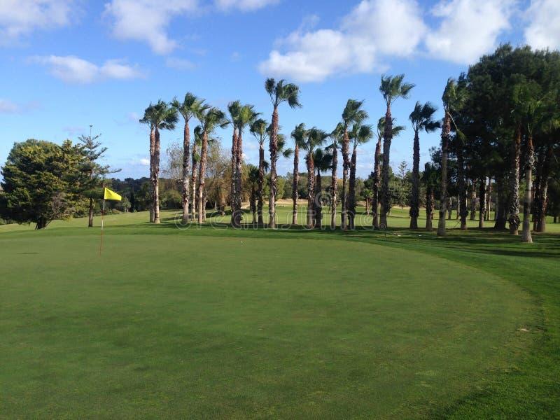 Golfgräsplan med palmträd arkivfoto