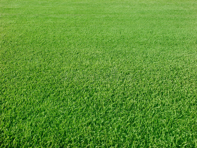 golfgräsplaner arkivfoto