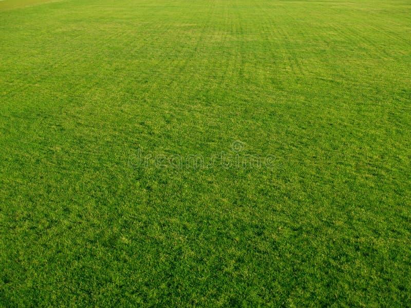 golfgreenuppvisning arkivfoto