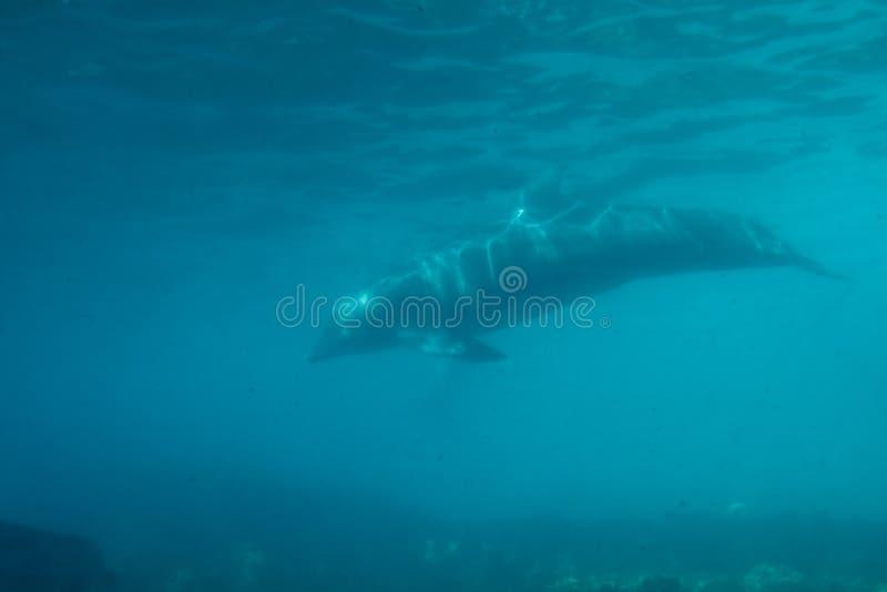 golfinho foto de stock