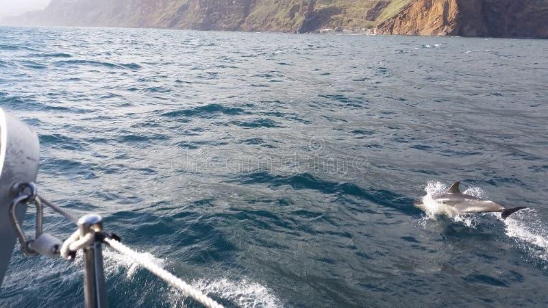 Golfinho de Katamaran com fundo da costa da montanha de Madeira imagem de stock royalty free