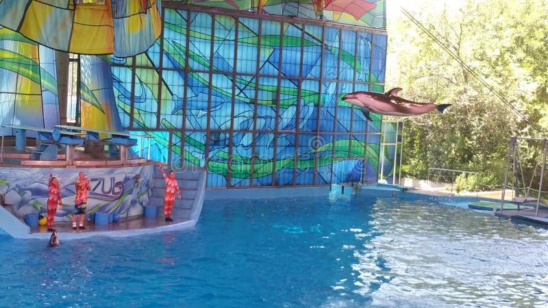 Golfinho de Seaworld San Antonio fotografia de stock royalty free