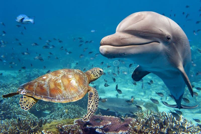 Golfinho e tartaruga subaquáticos no recife fotografia de stock
