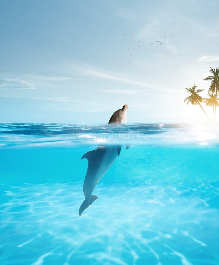 Golfinho nariz de garrafa nadando em água de cristal azul fotografia de stock royalty free