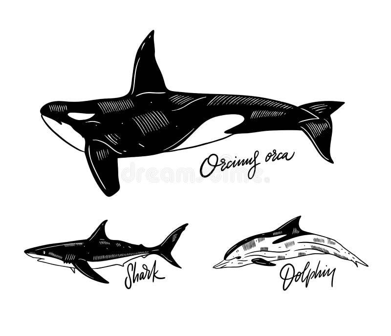 Golfinho, orca e tubarão Ilustra??o desenhada m?o Estilo da gravura Isolado no fundo branco ilustração royalty free