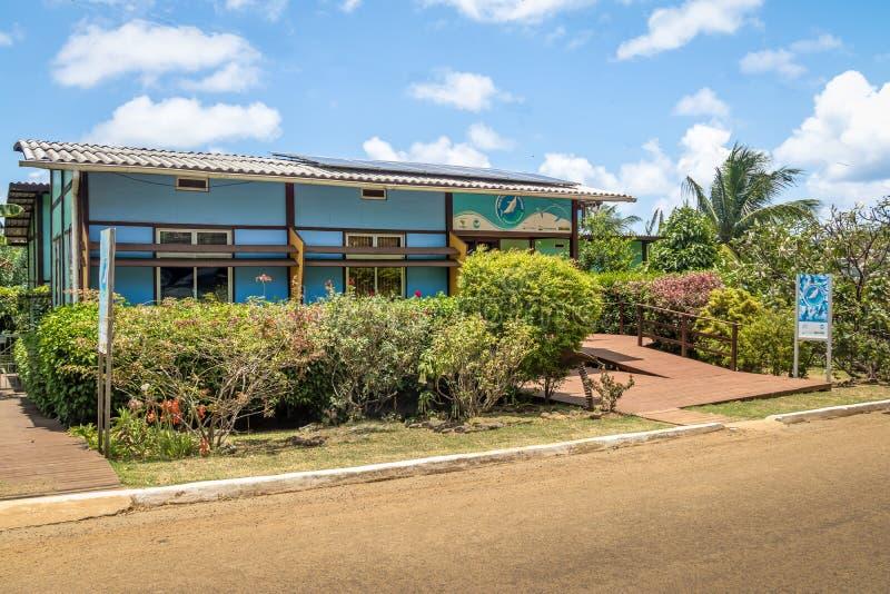 Golfinho Rotador锭床工人海豚Boldro村庄的-费尔南多・迪诺罗尼亚群岛, Pernambuco,巴西项目总部 免版税库存照片