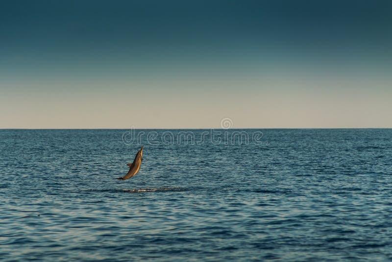 Golfinhos de observação no por do sol ou no nascer do sol, golfinhos no Oceano Índico foto de stock