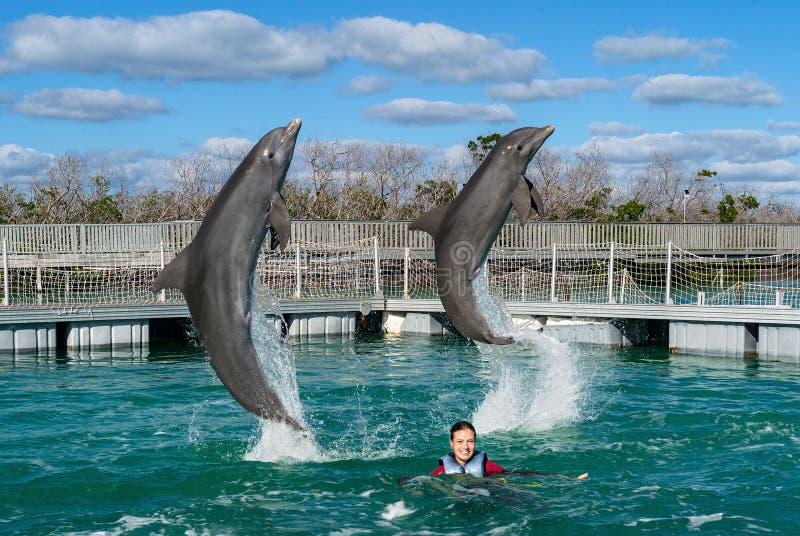 Golfinhos de salto Natação da mulher com os golfinhos na água azul imagem de stock royalty free