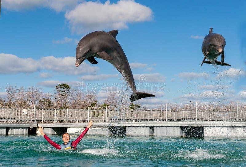 Golfinhos de salto Natação da mulher com os golfinhos na água azul foto de stock royalty free