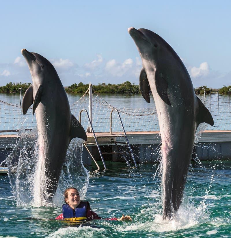 Golfinhos de salto Nata??o da mulher com os golfinhos na ?gua azul imagens de stock