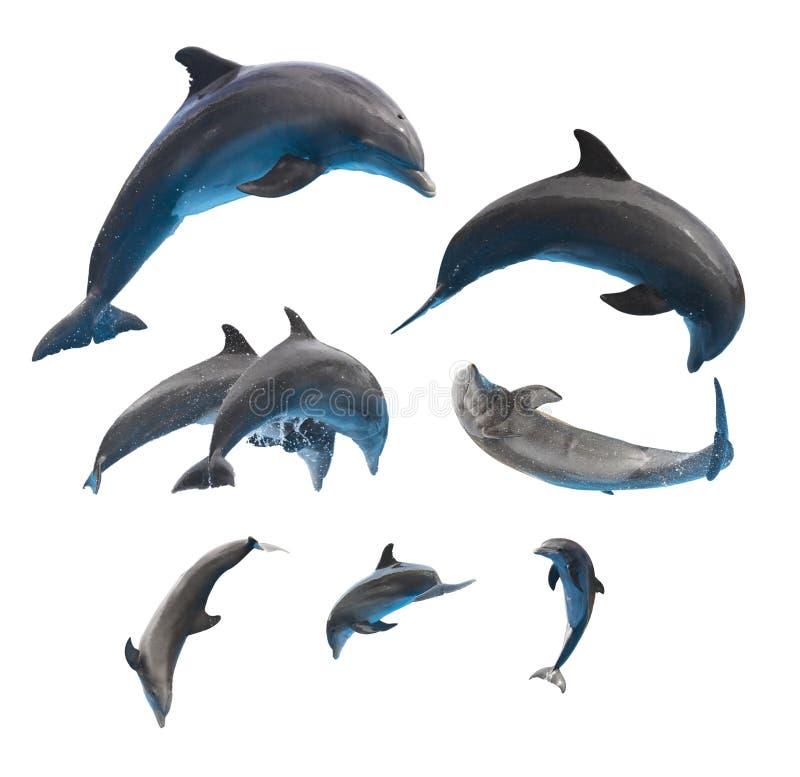 Golfinhos de salto no branco imagem de stock