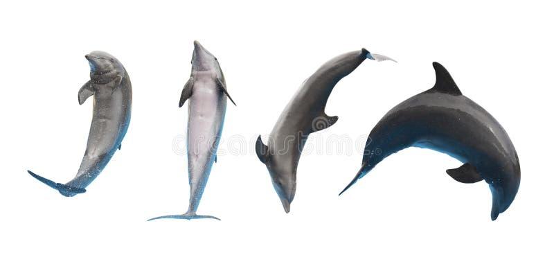 Golfinhos de salto no branco foto de stock
