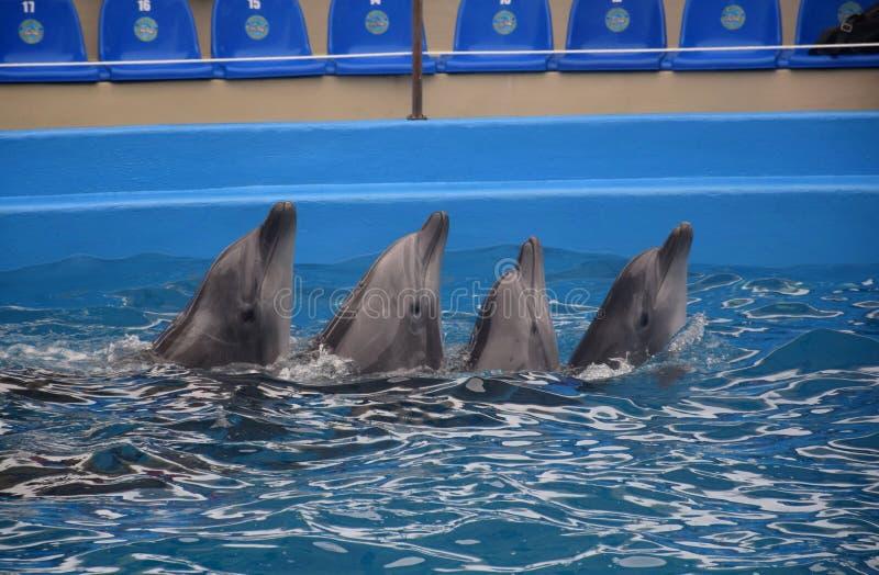 Golfinhos, Odessa fotos de stock