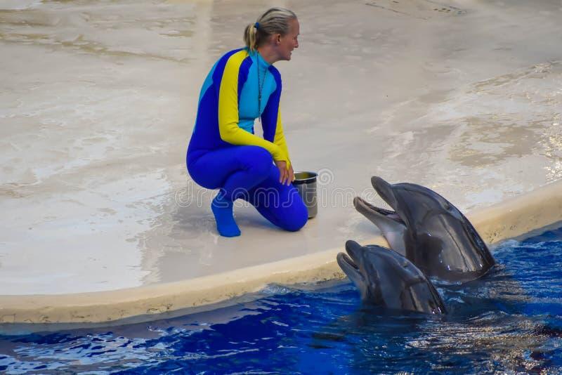 Golfinhos que esperam o instrutor para alimentá-los com peixes, como uma recompensa para sua acrobacia em Seaworld imagem de stock