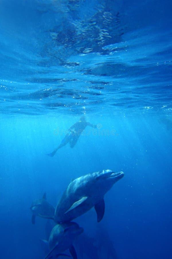 Golfinhos selvagens foto de stock