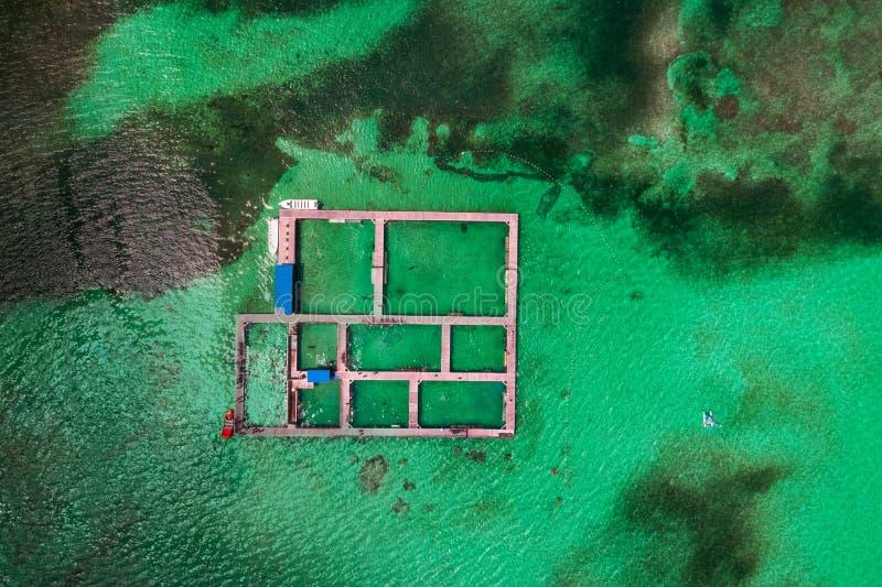 Golfinhos, tubarões, raia-de-coleira no parque de piscinas das caraíbas Nadar com peixe Vista aérea fotografia de stock