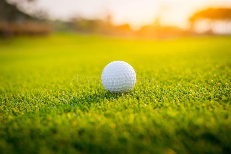 Golfista stawia pi?k? golfow? na zielonej trawie przy polem golfowym dla gry z plamy t?em zdjęcia royalty free