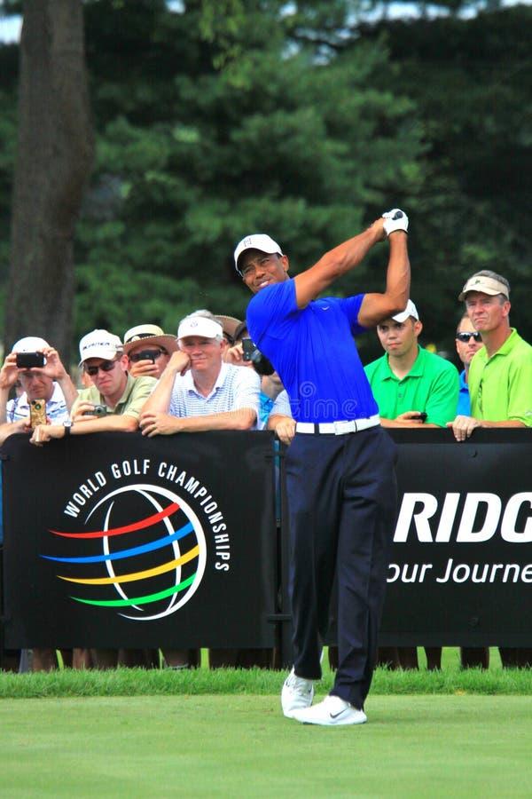 Golfisty tygrysa drewna zdjęcia royalty free