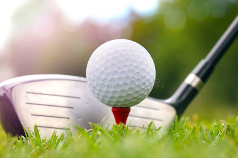 Golfklubb och boll i gräs royaltyfria foton