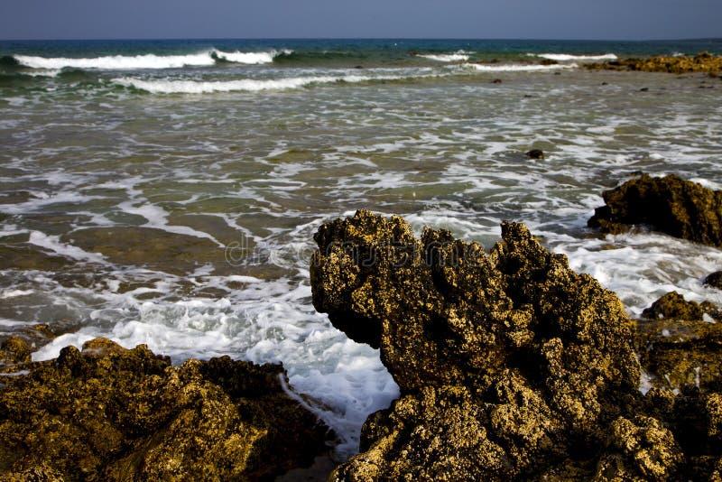 Golfo Лансароте el pondin мускуса Испании стоковые фотографии rf
