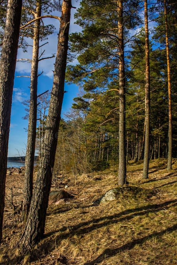 Golfo della Finlandia a St Petersburg immagini stock
