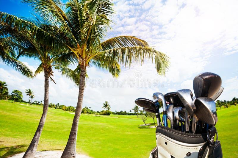Golfowa torba z klubami przeciw zielonemu kursowi i palmom zdjęcie royalty free