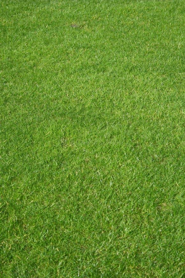 golfowa trawy.