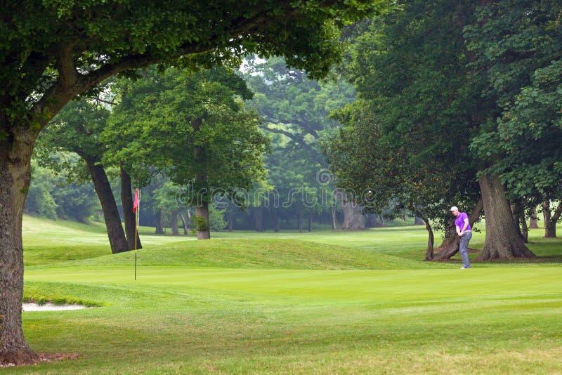 Golfspieler, der auf das Grün abbricht lizenzfreies stockbild