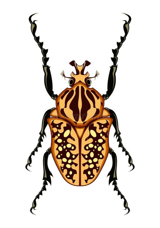 Goliath Beetle Vector Illustration royaltyfri foto