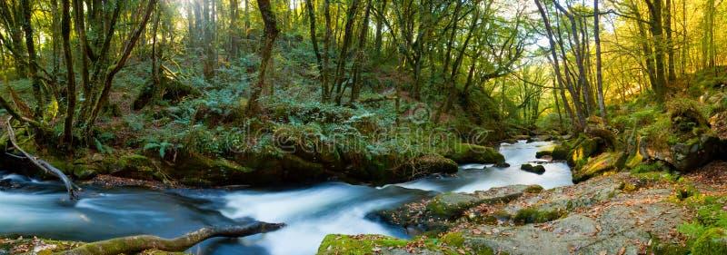 Golitha Falls Cornwall Royalty Free Stock Photos