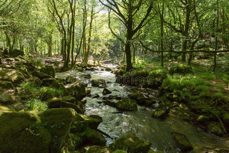 Golitha spadki Rzeczny Fowey Bodmin Cumują Cornwall Anglia zdjęcia stock