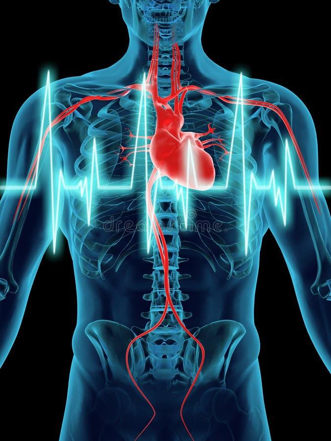 Golpe de corazón humano stock de ilustración