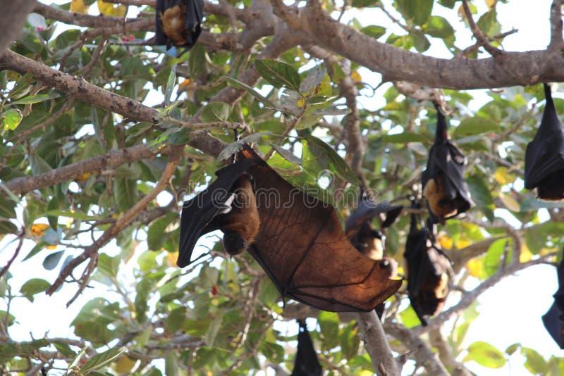 Golpeie a suspensão para baixo no ramo de árvore com asas abertas fotos de stock